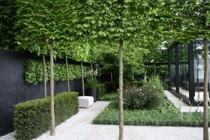 pleached-trees-chelsea-X
